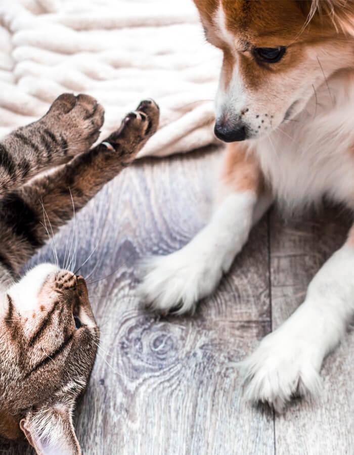 Pet-Sitting1