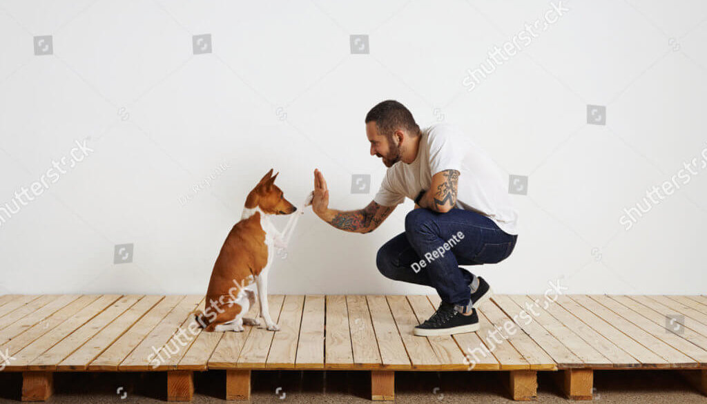 stock-photo-owner-trains-his-dog-to-give-hive-five-462436696
